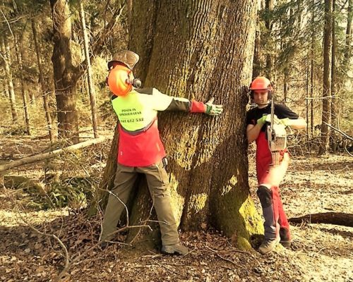 odkup lesa cena (2)