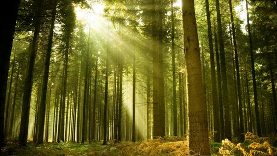 Lubadar Letos Ogroža Gozdove