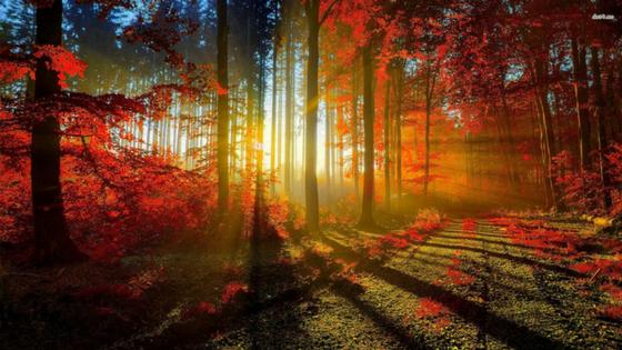 Kako Pravilno Poskrbeti Za Svojo  Gozdno Posest?