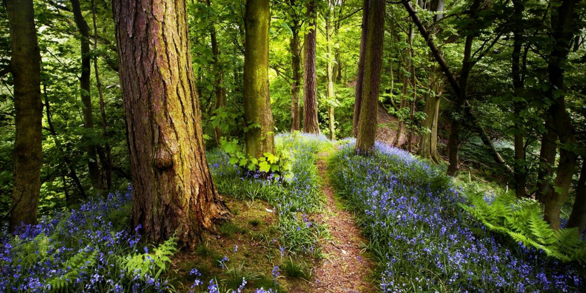Lastniki gozdov in subvencije