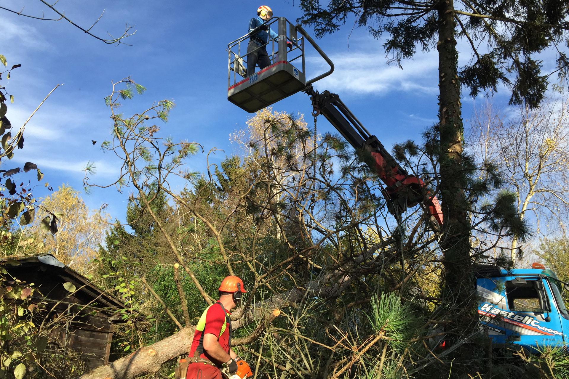 Obrez dreves ter obžagovanje in podiranje dreves