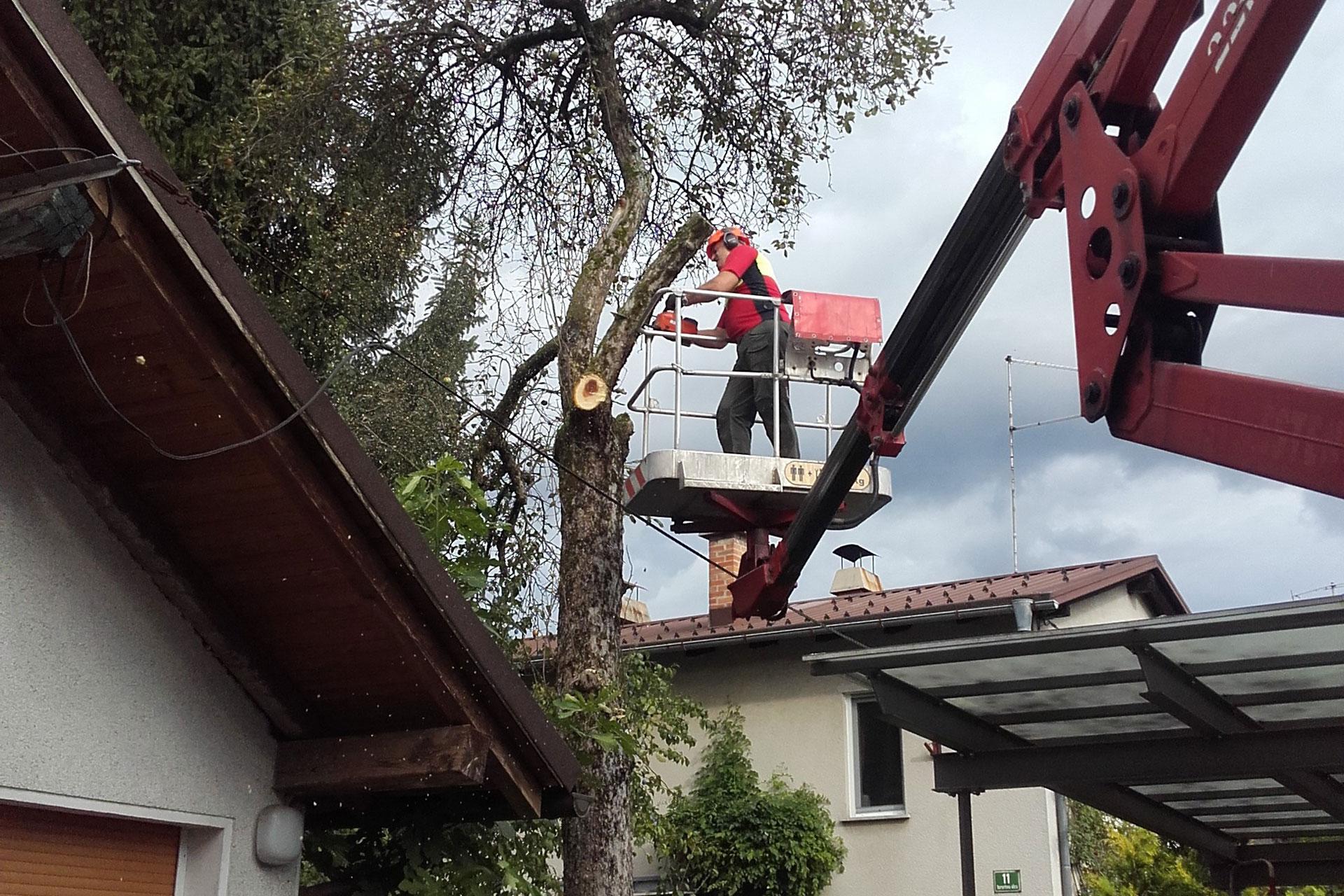 Obrezovanje dreves v naselju in sečnja dreves v mestu
