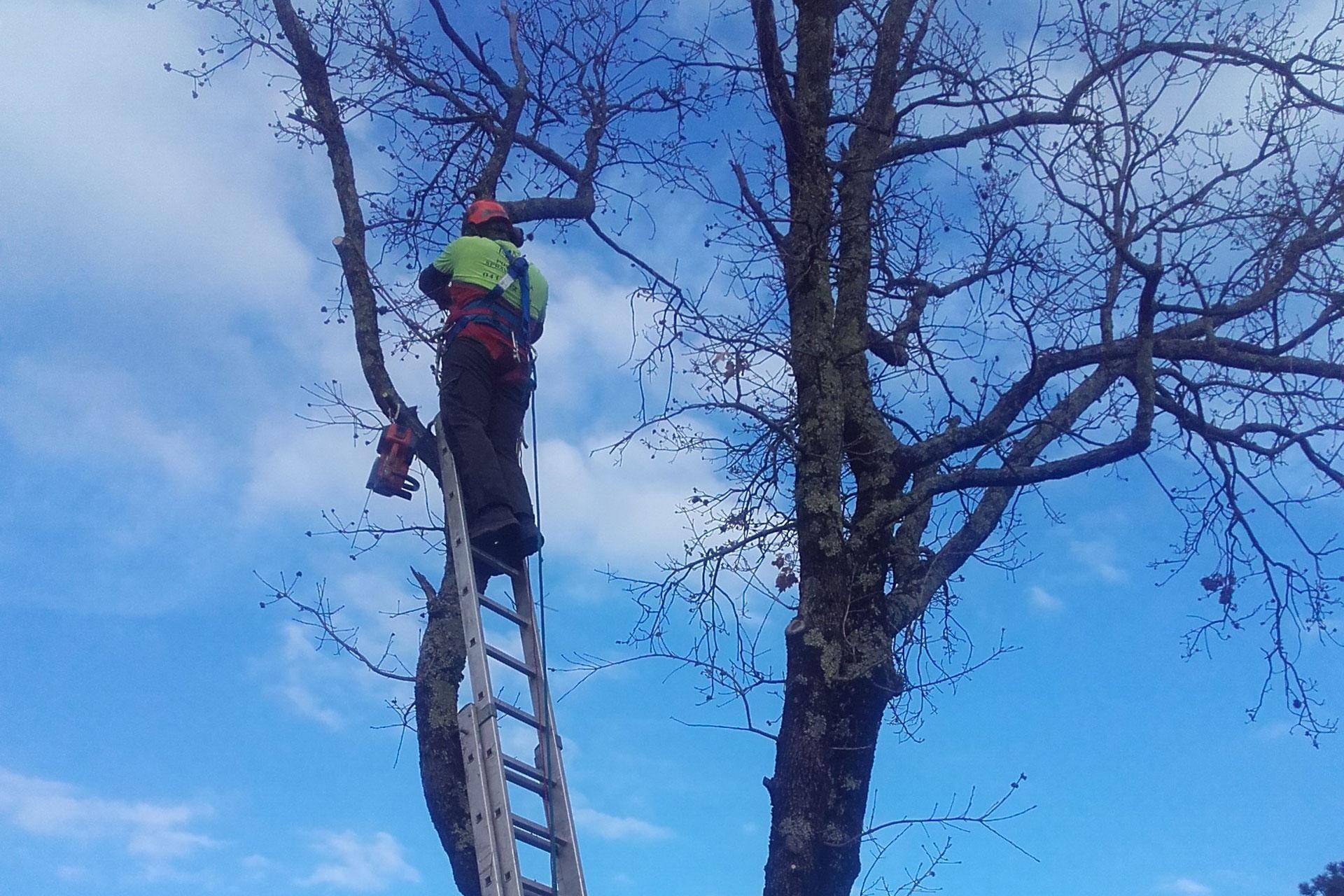 Obžagovanje dreves in obrezovanje dreves po naročilu