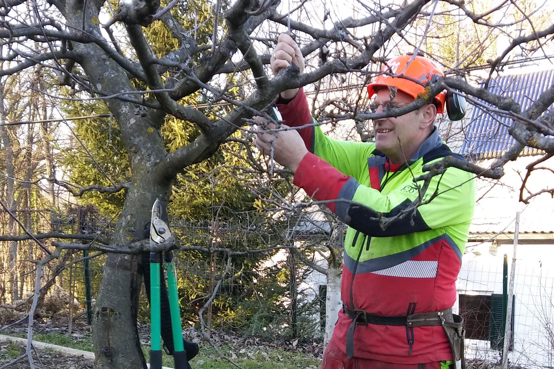 Obrezovanje sadnih dreves in rezanje mladega sadnega drevja